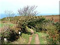 WV6055 : Jersey coast path above the Devils Hole by Oliver Dixon