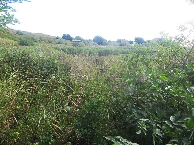 La Mare du Roue, Longis Common