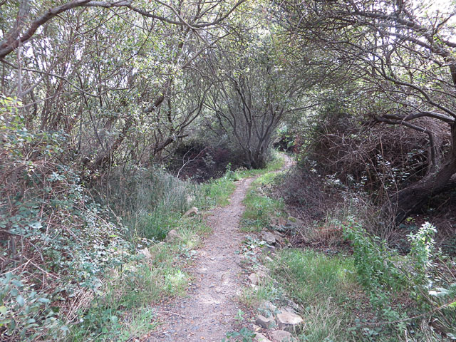 Path North from the Mannez Pond