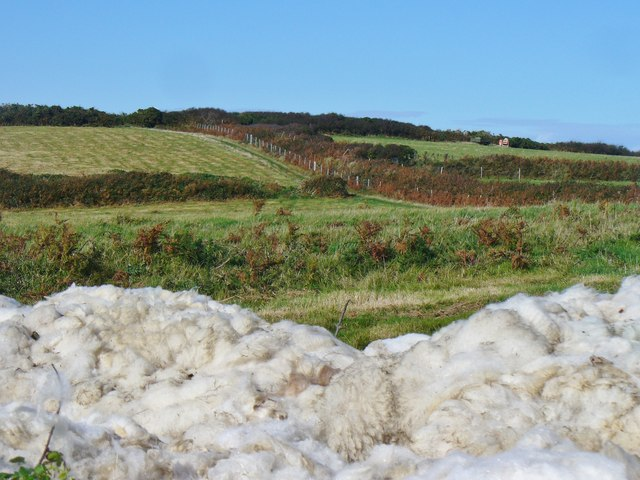 Sark - Wool Harvest