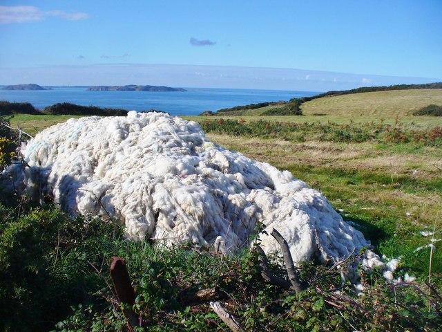 Sark - Wool Harvest