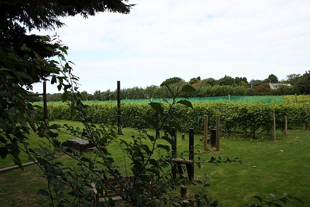 Vineyards at La Mare