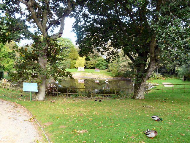 Lion Park Pond