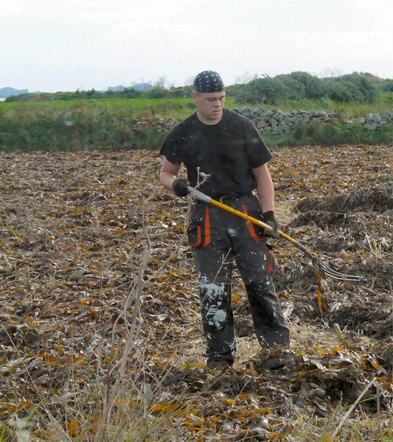 Seaweed Spreading