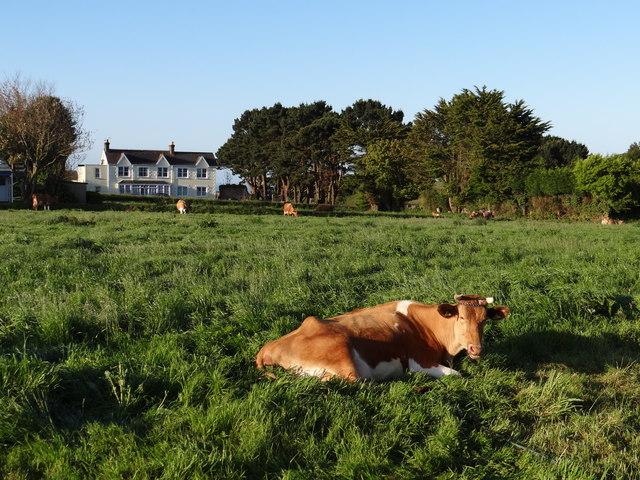 Pasture at Le Chene