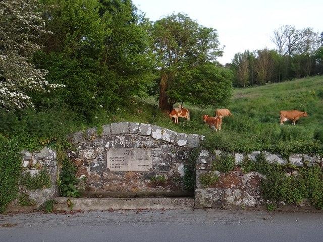 Cattle near roadside drinking trough at Castel