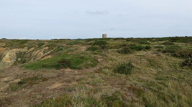 Heathland near Telegraph Bay