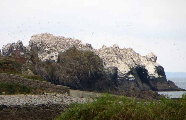 Les Etacs Gannet Colony from above Fort Clonque