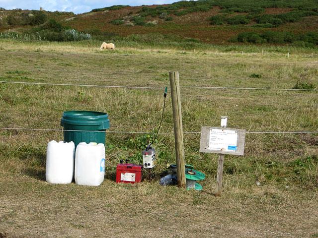 Longis Common Fence and Grazing Pony