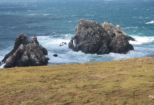 Les Etacs Gannet Colony from the Cliff Top