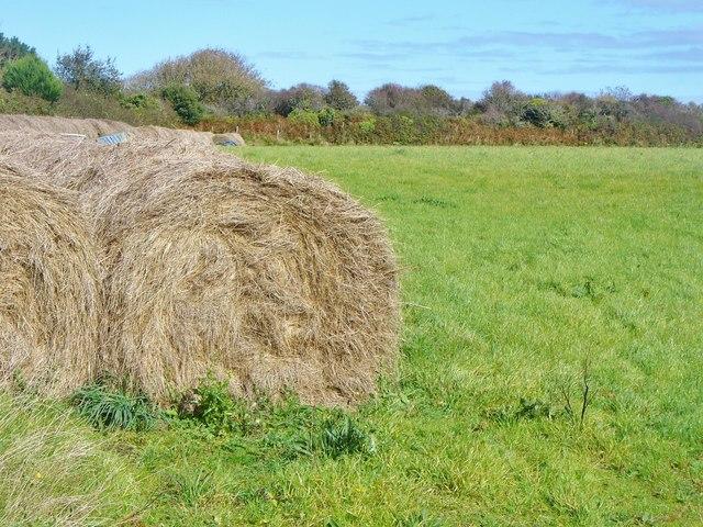 Little Sark - Harvest