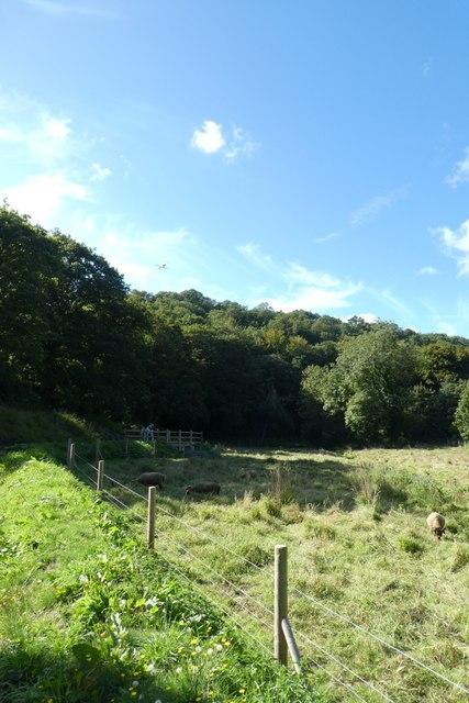 Field opposite Le Moulin de Quétivel