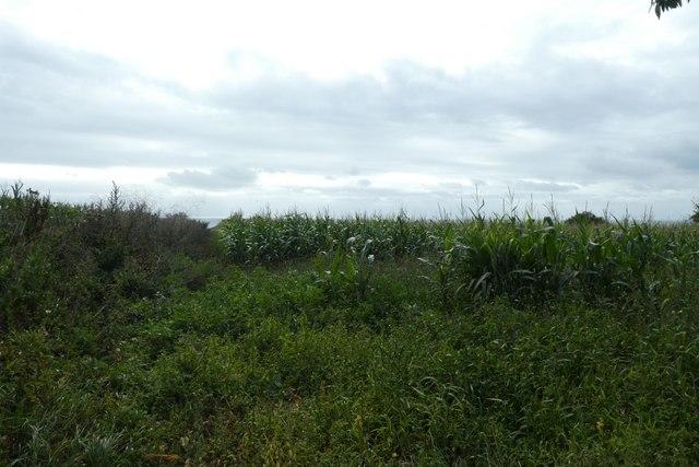 Fields from Rue au Blancq