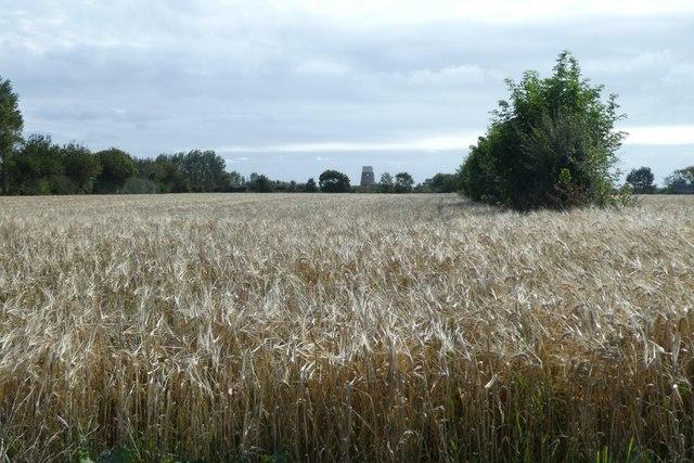Barley fields beside Rue au Blancq