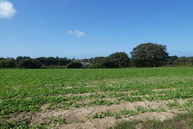 Field beside Rue de la Garenne