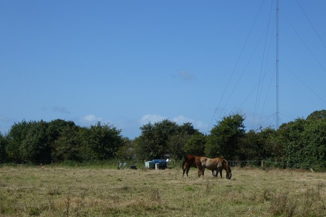 Horses and radio masts