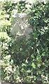 WV2775 : Old Milestone, Route de Plaisance (Ancien jalon) by Tim Jenkinson